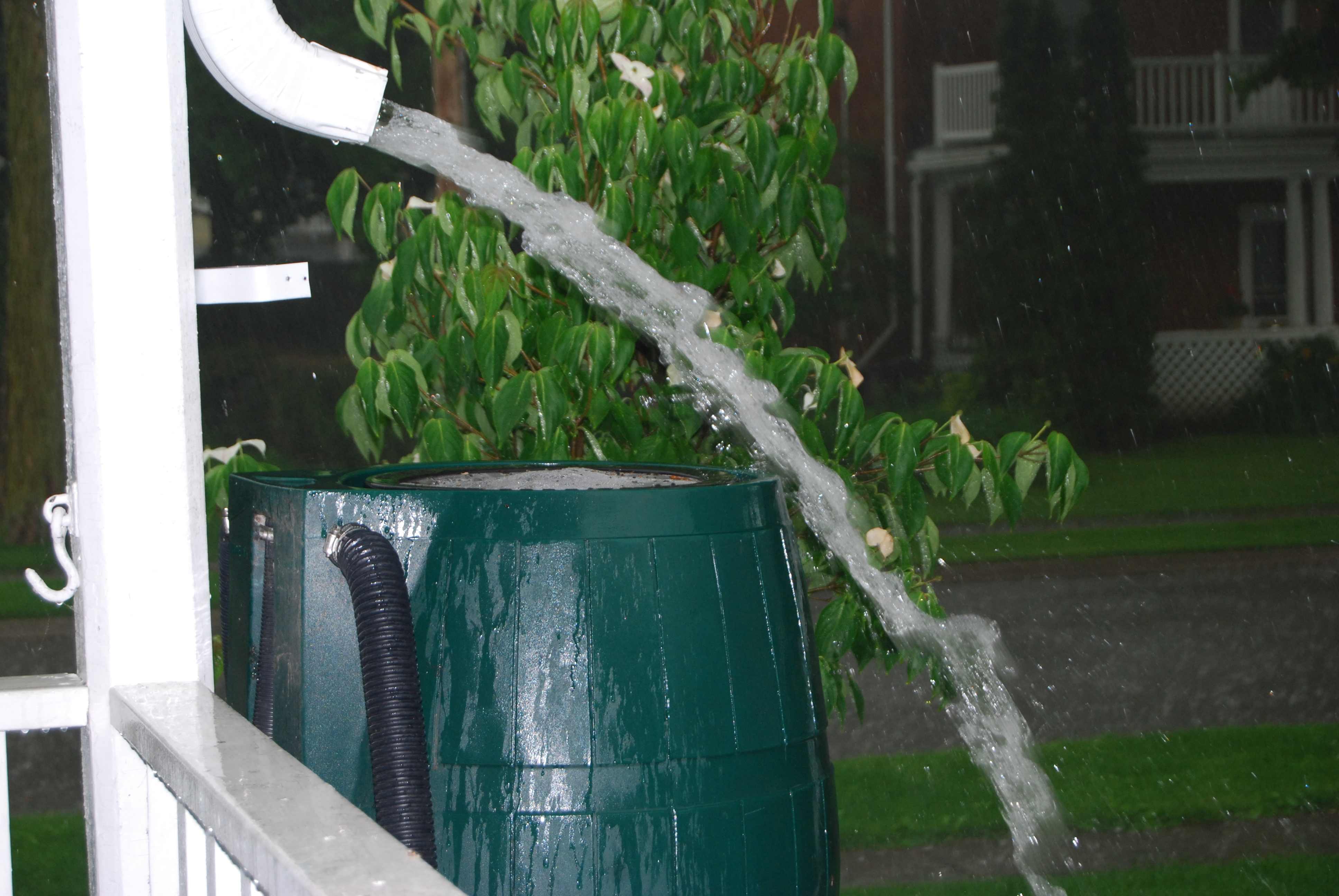 Rain Barrels – Who's Crazy Now?